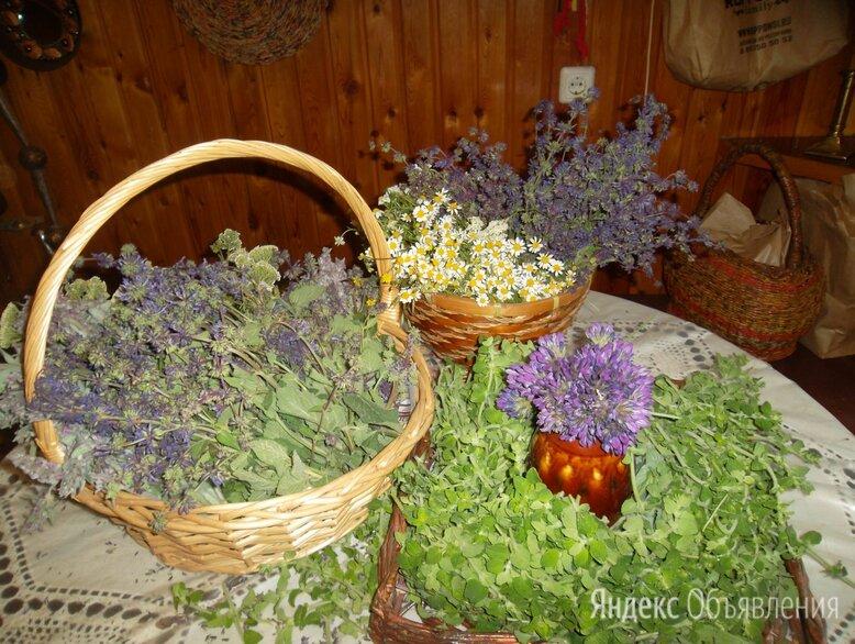 Сушеные травы и сборы по цене 200₽ - Ингредиенты для приготовления напитков, фото 0