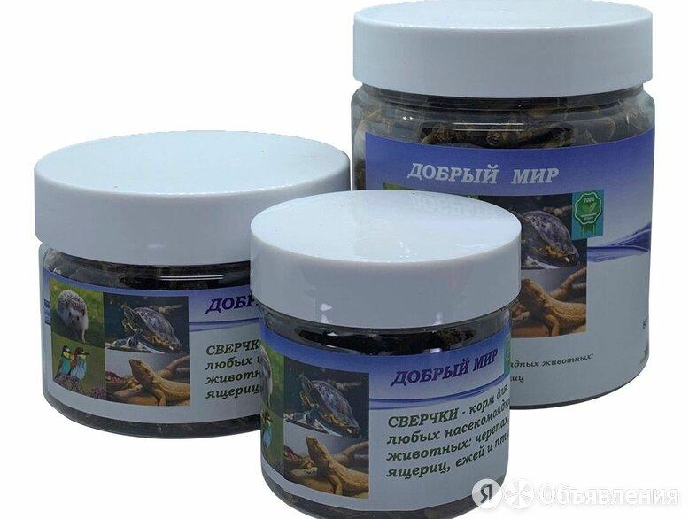 Сверчки - корм для насекомоядных животных и птиц по цене 160₽ - Корма , фото 0