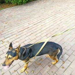Животные - Найден кобель,щенок в СНТ Салют,Балобаново,Жуковский район,Калужская область, 0