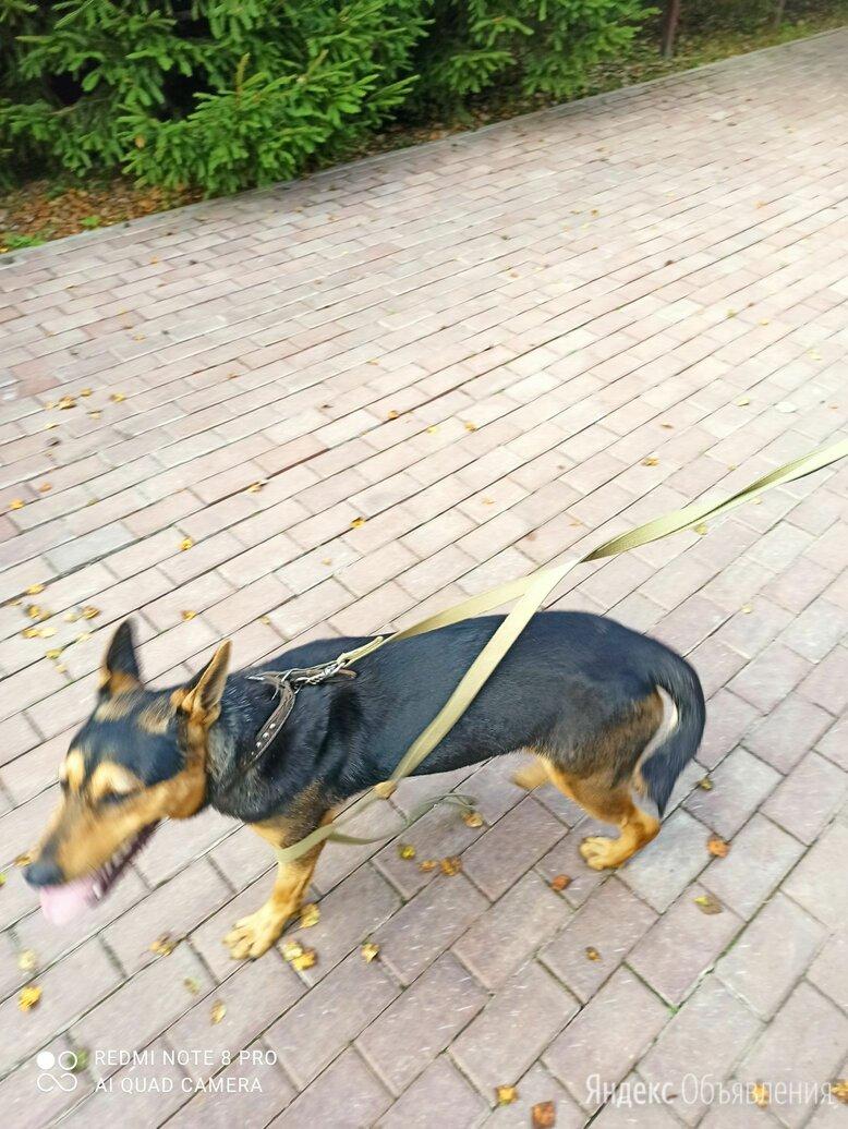 Найден кобель,щенок в СНТ Салют,Балобаново,Жуковский район,Калужская область по цене не указана - Животные, фото 0