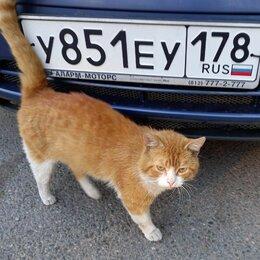 Животные - Ласковый рыжик Ричард 4 года ищет свой дом и маму, 0