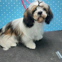 Собаки - ши-тцу, 0