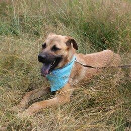 Собаки - Пес с синим язычком Ларс 1,5 года в добрые руки, 0