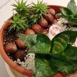 Комнатные растения - Мини сад суккуленты, 0
