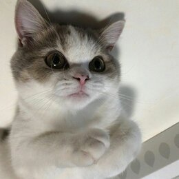 Кошки - kotek, 0