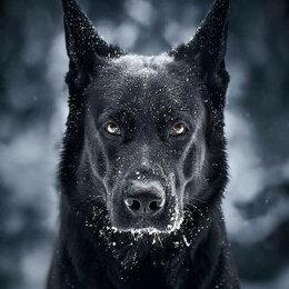 Настольные игры - Черный пес Артикул : GFR 5048, 0