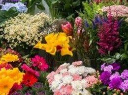 Торговля - Прибыльный цветочный магазин у метро, 0