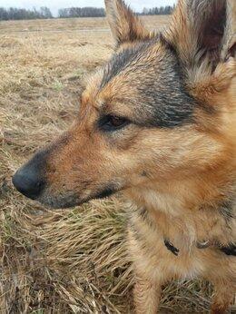 Собаки - Луша ищет хозяев, 0