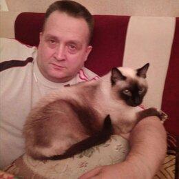 Кошки - Котик болинезийской породы, 0