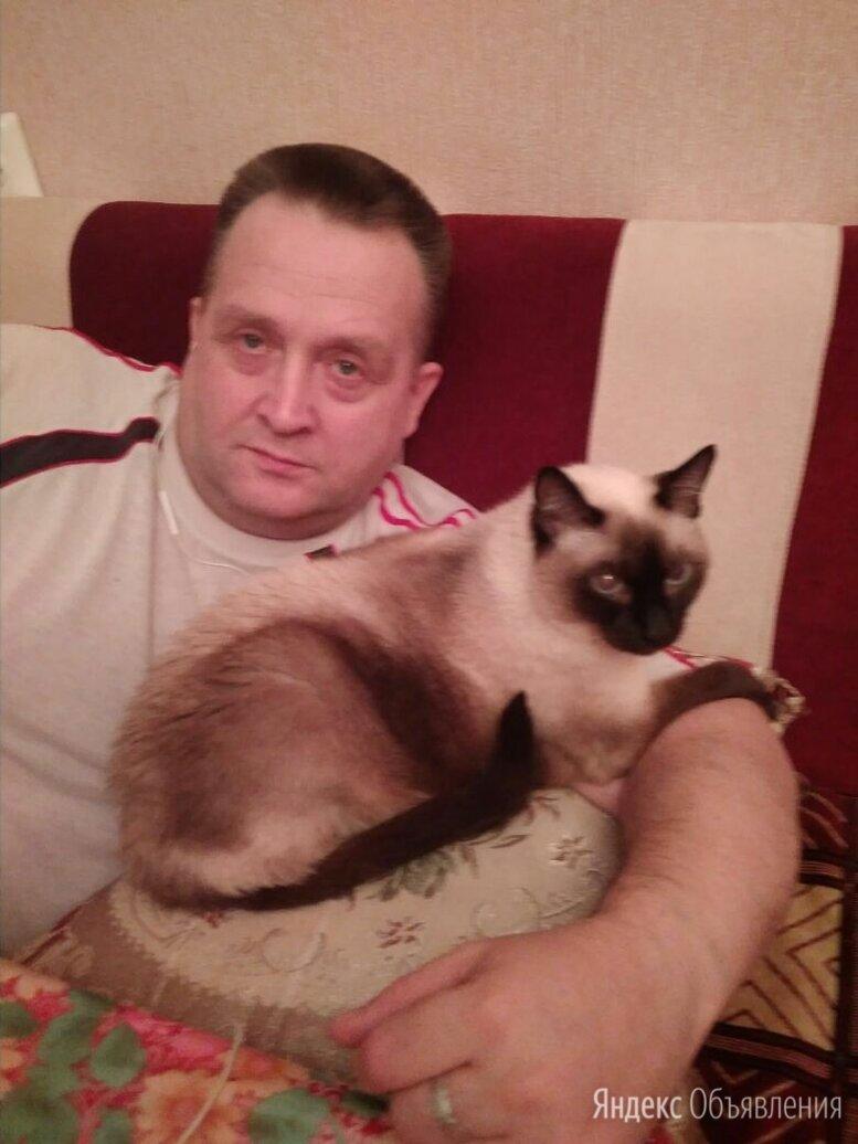 Котик болинезийской породы по цене не указана - Кошки, фото 0