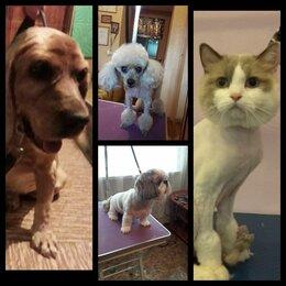 Груминг и уход - Груминг собак и кошек, 0