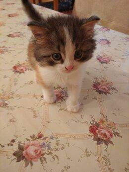 Кошки - Отдам в добрые руки, 0