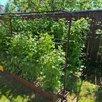 Шпалера для малины по цене 4000₽ - Шпалеры, опоры и держатели для растений, фото 1