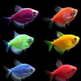 Аквариумные рыбки - Аквариумные рыбки новое поступление, 0
