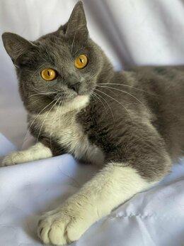 """Кошки - Избитую беременную кошку """"недохозяева"""" бросили в…, 0"""