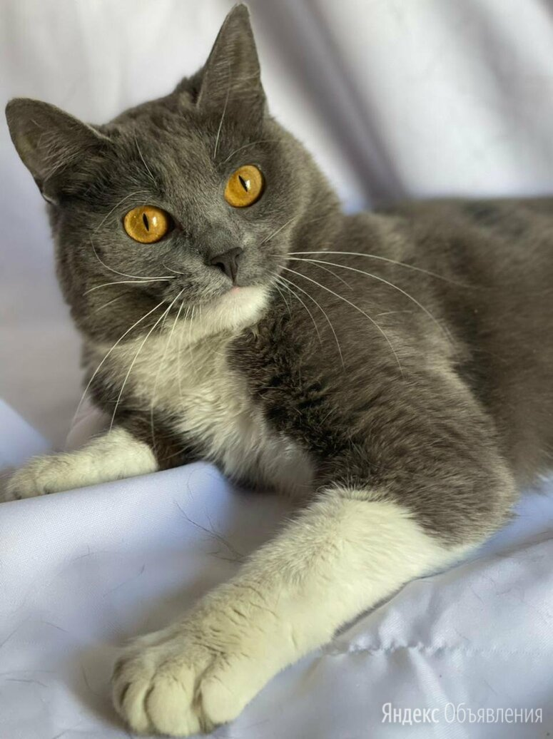 """Избитую беременную кошку """"недохозяева"""" бросили в клинике... по цене даром - Кошки, фото 0"""
