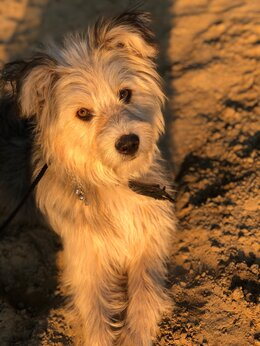 Собаки - Пёс Гоша для школьника, 0