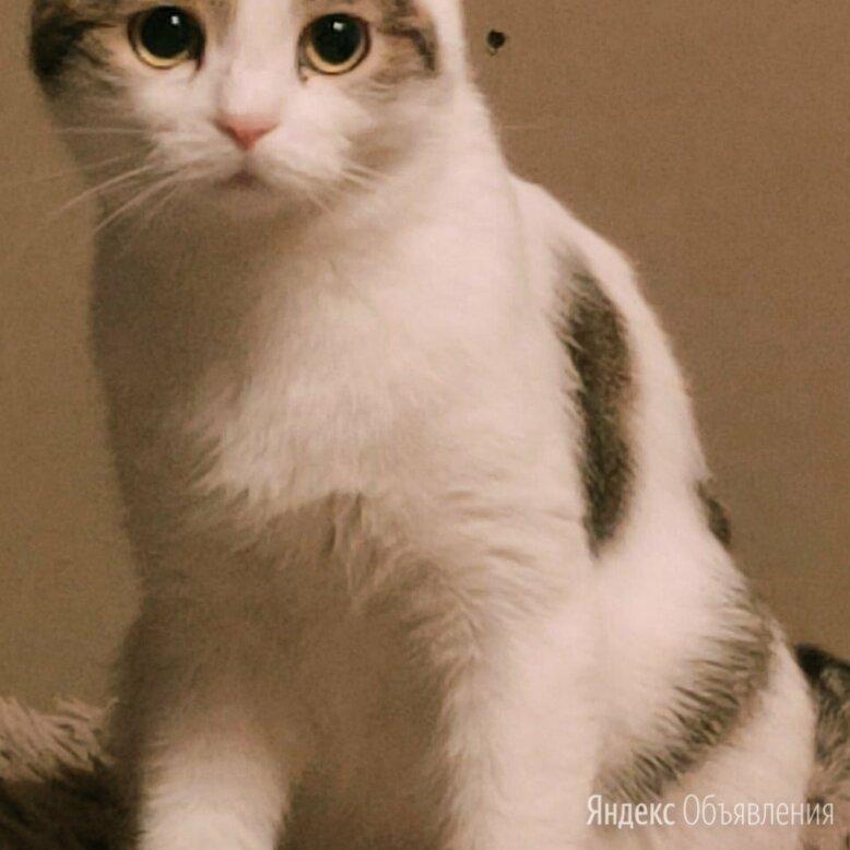 Мусенька по цене даром - Кошки, фото 0