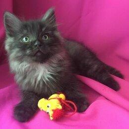 Кошки - Отдаю котенка Стивен, возраст 3 месяца, 0