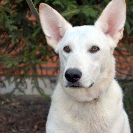 Собаки - Щенок подросток Снежок 7месяцев. Кастрирован, 0