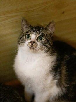 Кошки - Забавная милашка Мушка ищет дом, 0
