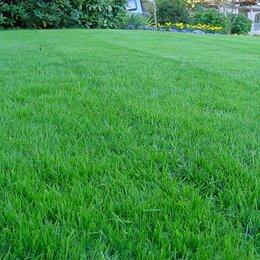 Газоны - Травосмесь для газона Город-сад, 0