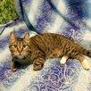 Молодой котик бесплатно по цене даром - Кошки, фото 3