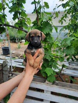 Собаки - Отдам красивых щенят в добрые ручки, 0