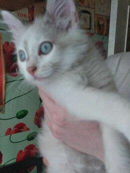 Кошки - Тайский котенок в добрые руки, 0