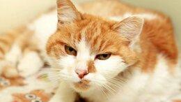 Кошки - Брюса – кошка, которая сама пошла за человеком, 0