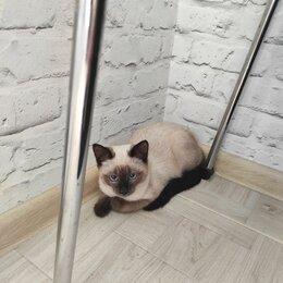 Животные - Сиамская кошка, 0