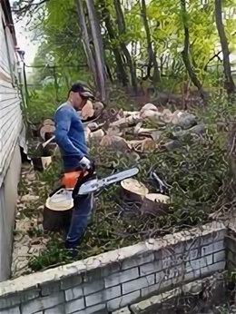 Бытовые услуги - Удаление деревьев., 0