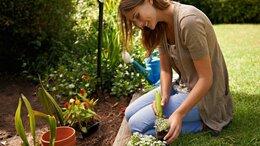 Прочие услуги - Озеленение/Посадка растений, 0