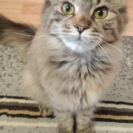 Кошки - Майн кун, 0