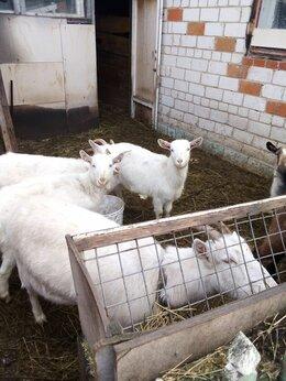 Сельскохозяйственные животные - Животные, 0