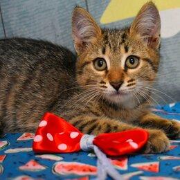 Кошки - Котёнок  тигренок Барсик 3месяца в добрые руки , 0