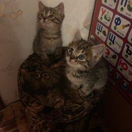 Кошки - Котики, 0
