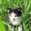 Котята в дар по цене даром - Кошки, фото 0