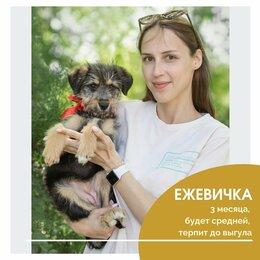 Собаки - Ежевичка , 0