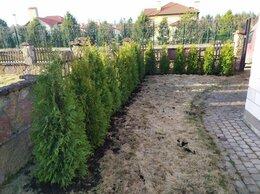 Рассада, саженцы, кустарники, деревья - Живая изгородь из Туй под ключ, 0