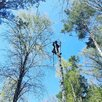 Чистка участков!спил деревье любой сложности.  по цене 500₽ - Бытовые услуги, фото 3
