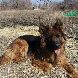 Собаки - Щенки Немецкой Овчарки! , 0