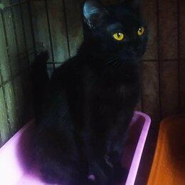 Кошки - Кошечка Марго 1-1,5 года, 0