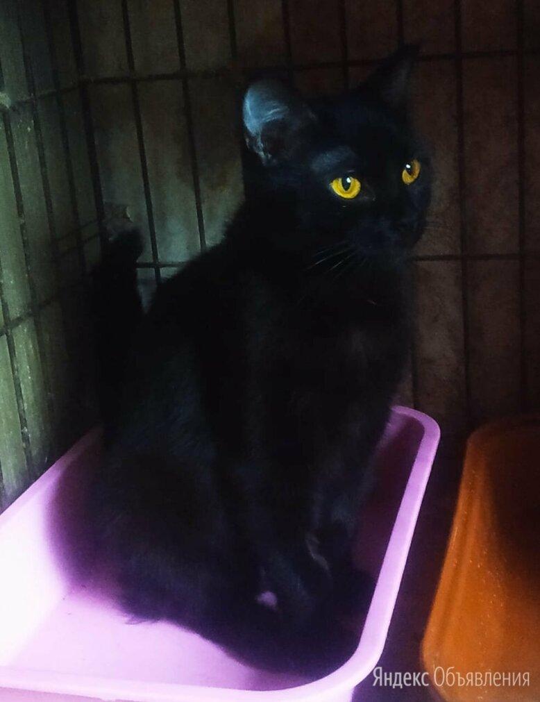 Кошечка Марго 1-1,5 года по цене даром - Кошки, фото 0