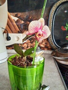 Комнатные растения - Цветок горшечный вместе с кашпо и держателем., 0