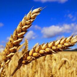 Товары для сельскохозяйственных животных - Пшеница , 0
