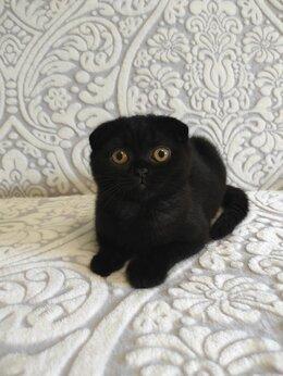 Кошки -  Шикарная чёрная висл. кошечка с янтарными…, 0