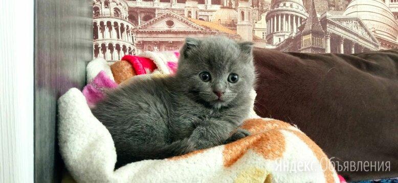 Котята по цене 2500₽ - Кошки, фото 0