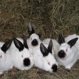 Кролики - кролики, 0