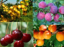 Рассада, саженцы, кустарники, деревья - Саженцы плодовых деревьев и кустарников Питомник, 0